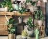 用这些植物,打造夏日绿荫之家!