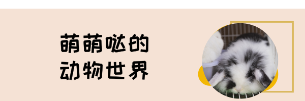 默认标题_热文链接_2019.03.12 (5).png
