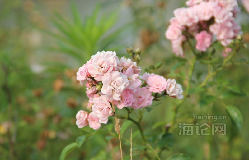 IMG_5280_副本.jpg