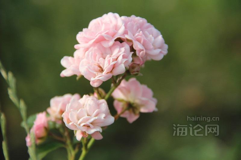 IMG_5279_副本.jpg